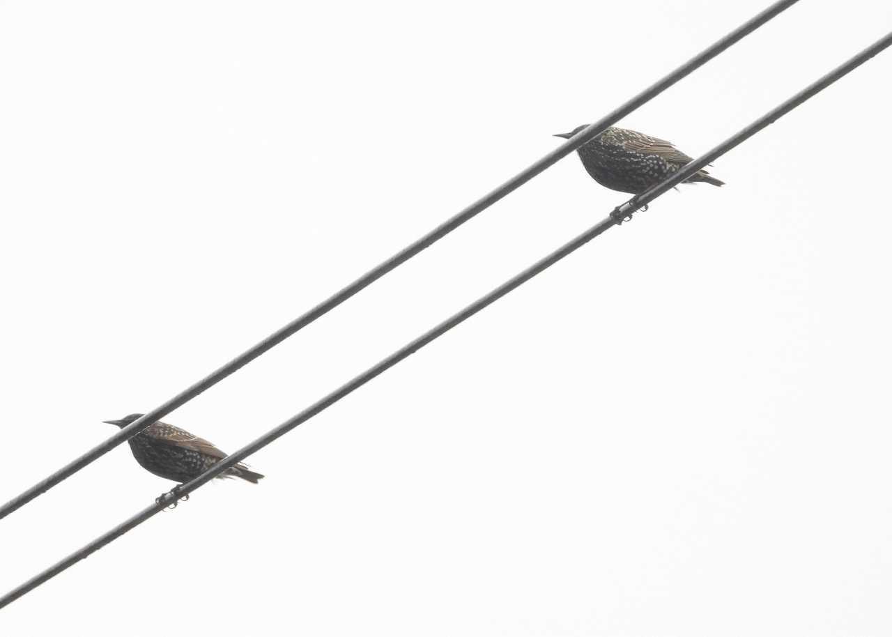 八重山諸島~探鳥~与那国島編 ⑧_d0360910_22221882.jpg