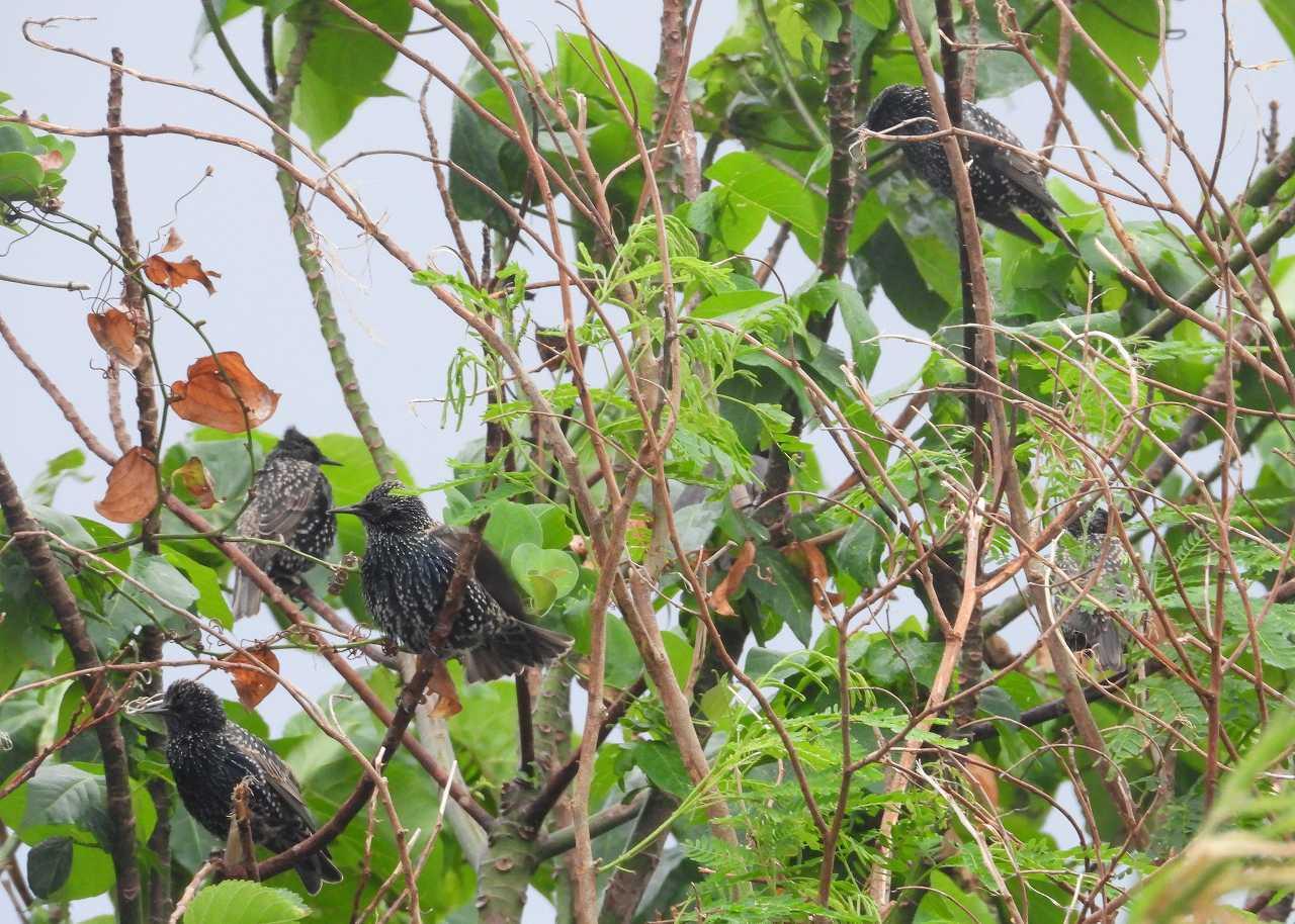 八重山諸島~探鳥~与那国島編 ⑧_d0360910_22223033.jpg