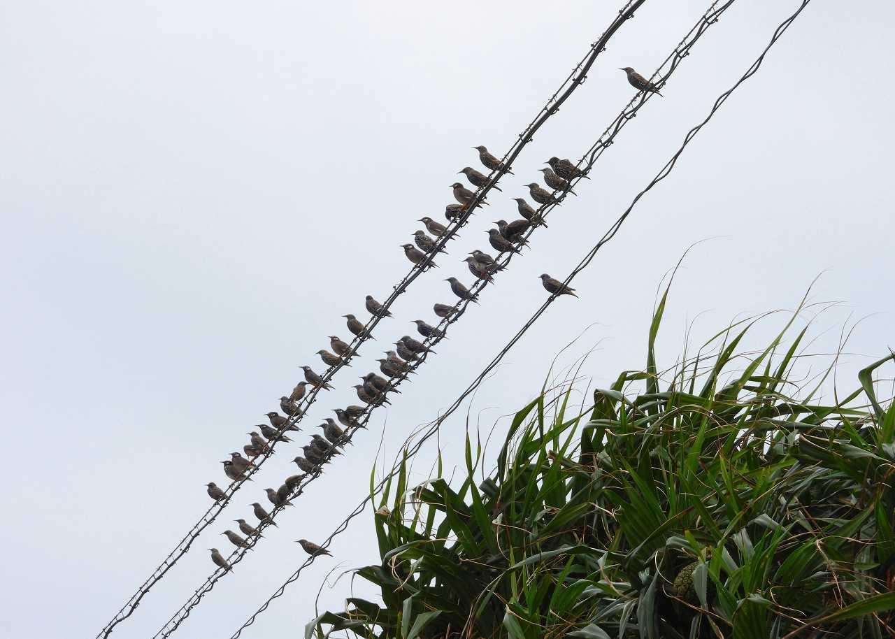 八重山諸島~探鳥~与那国島編 ⑧_d0360910_22225020.jpg