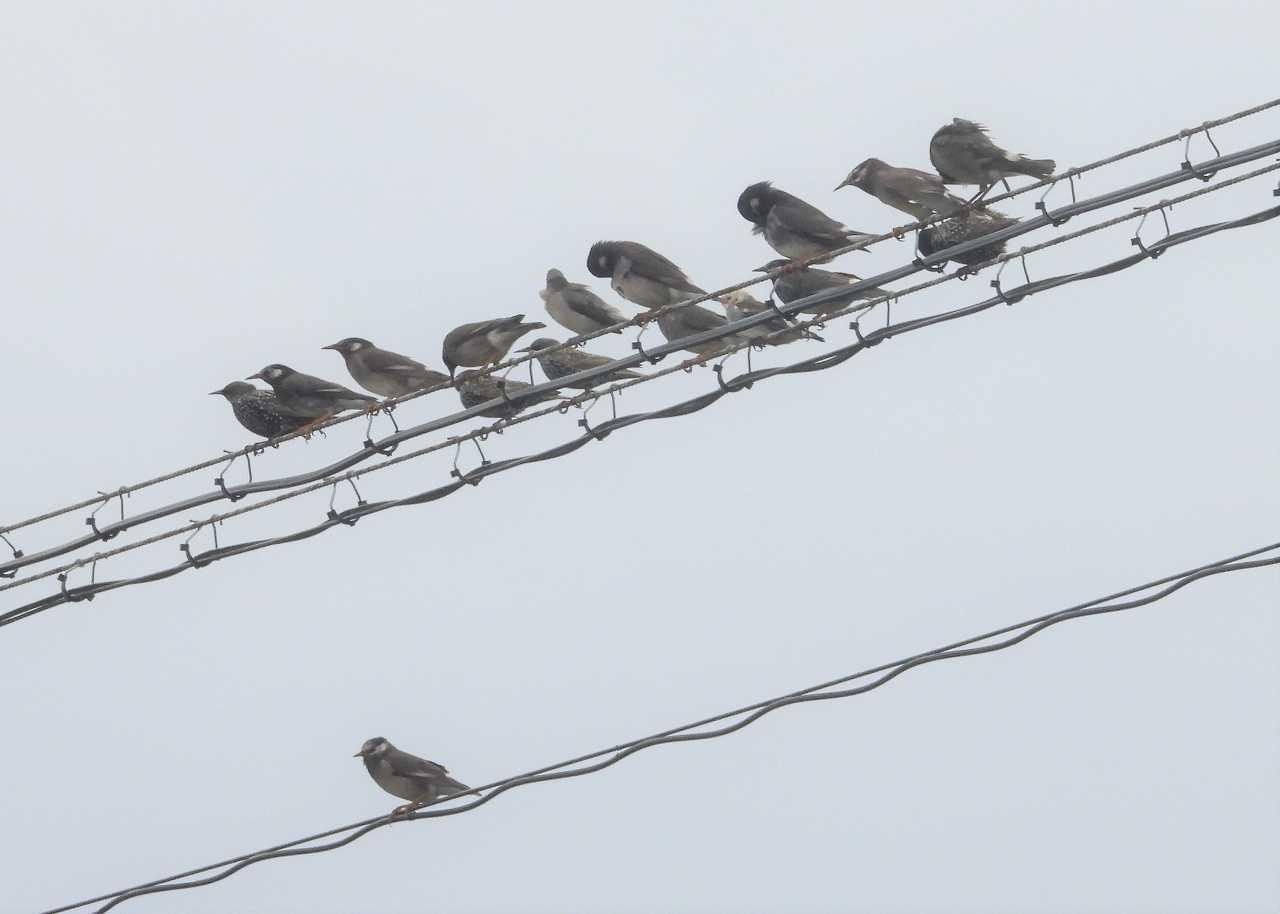 八重山諸島~探鳥~与那国島編 ⑩_d0360910_23415995.jpg