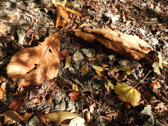 11/4 森林セラピ-体験_b0189727_11101266.jpg