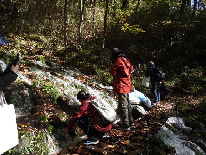 11/4 森林セラピ-体験_b0189727_11240579.jpg
