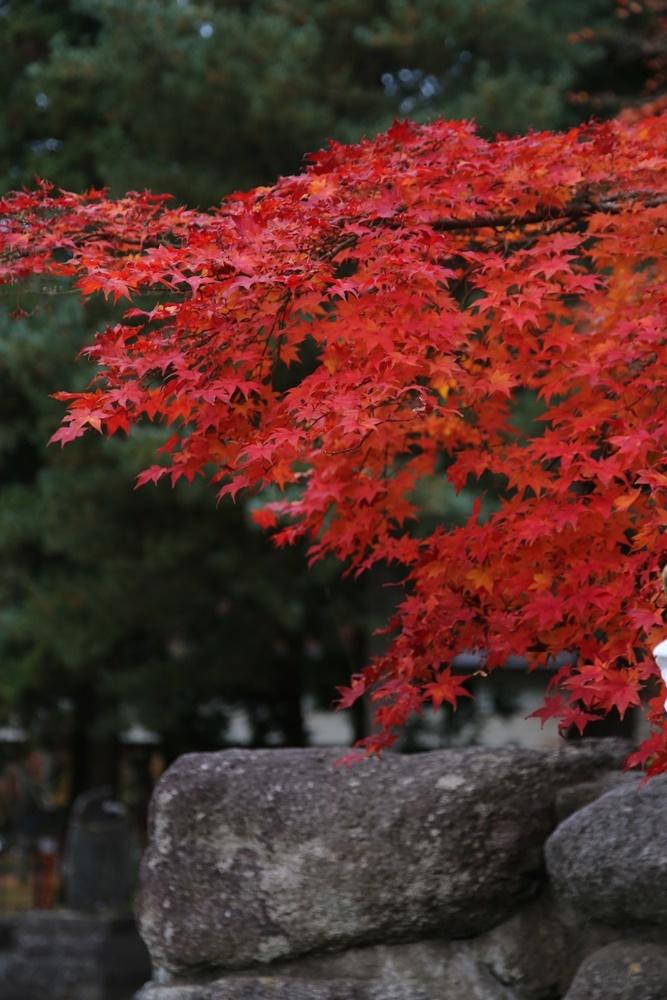 紅葉も終盤_c0111229_19055457.jpg