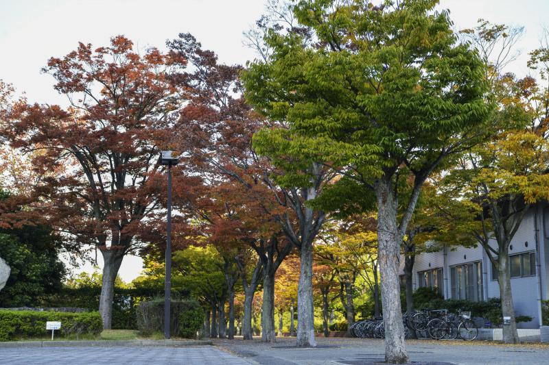 運動公園の秋 2019_d0246136_18330082.jpg