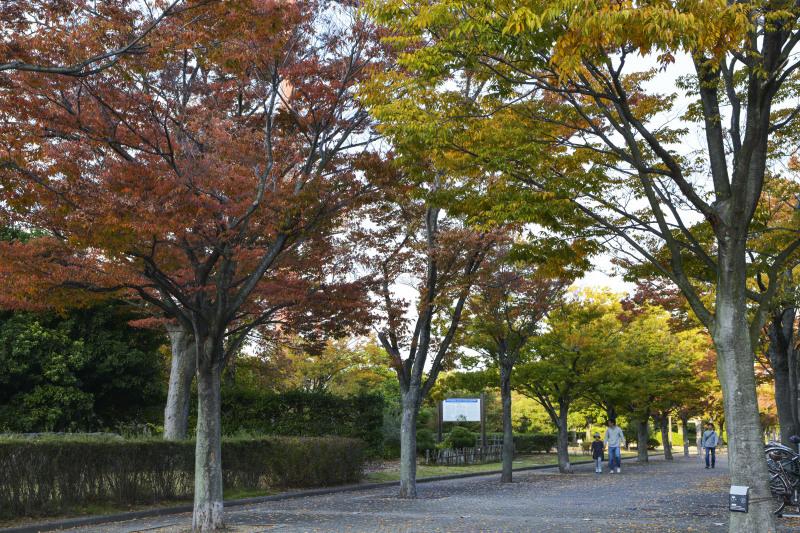 運動公園の秋 2019_d0246136_18330872.jpg
