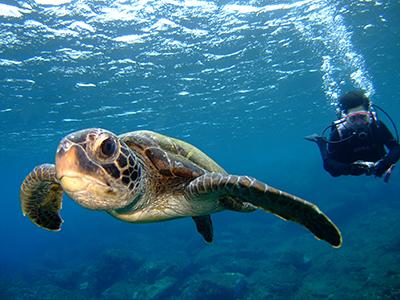 体験でも・・泳ぐウミウシ!!_b0189640_18095120.jpg