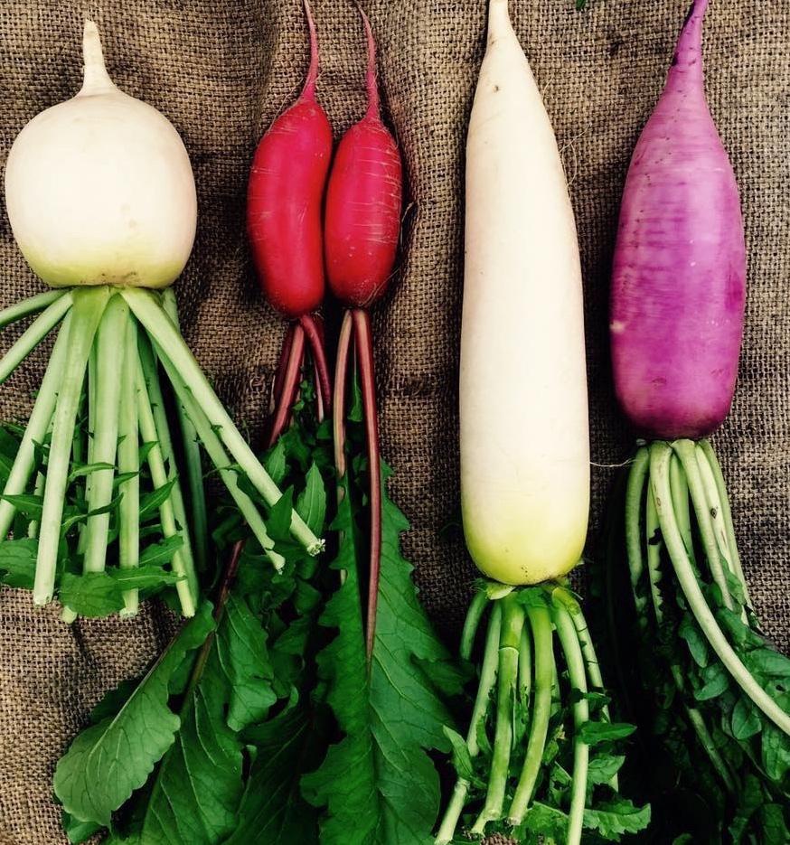 今月の野菜の軒下販売_a0265743_00284098.jpg