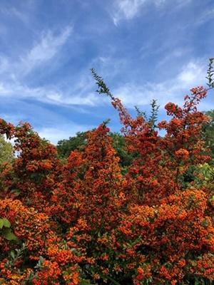 紅葉の季節_a0212046_15570265.jpg