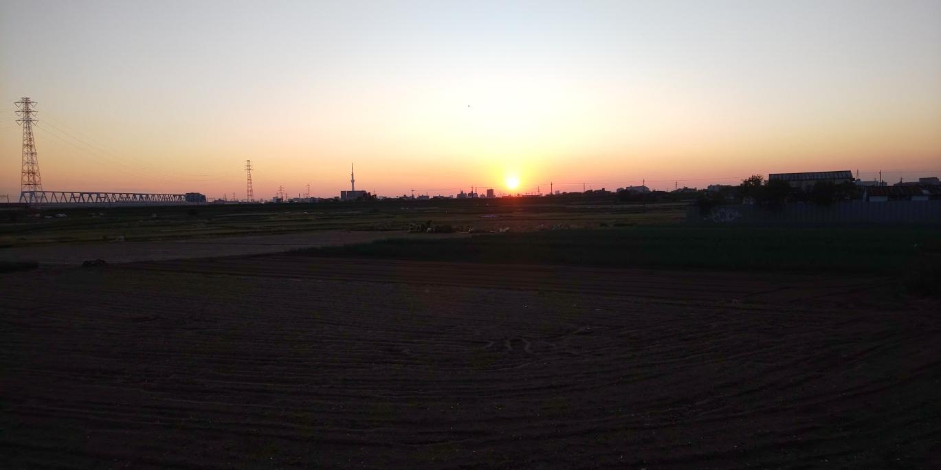 松戸 下矢切 ねぎ畑とスカイツリーと夕陽_c0064859_17353843.jpg