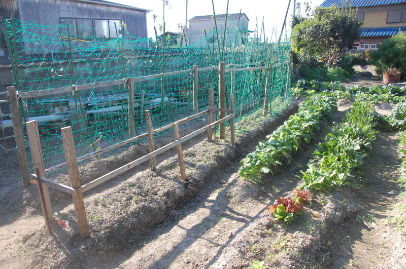 豆類のネット張り・・・我が家の農園_c0108460_16242652.jpg