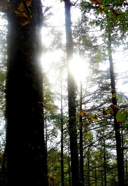 <2019年10月20~21日>ゼロ磁場「分杭峠」&200名山「経ケ岳」単独登山_c0119160_07025406.jpg