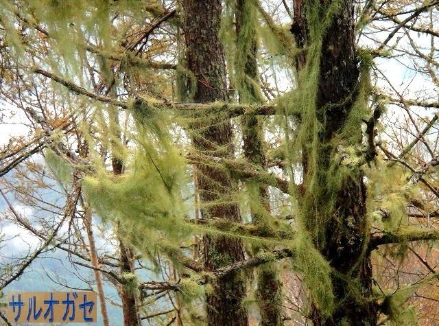 <2019年10月20~21日>ゼロ磁場「分杭峠」&200名山「経ケ岳」単独登山_c0119160_11005108.jpg