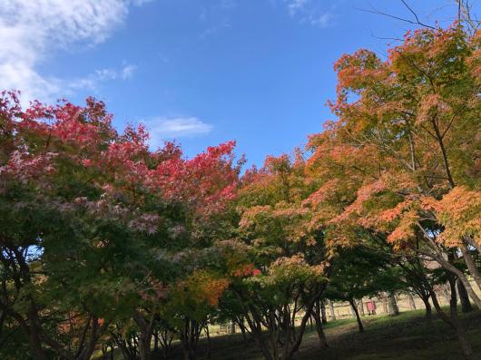 やっと秋到来_f0126965_12010680.jpg