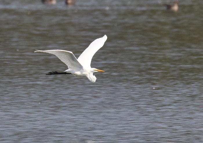 真っ白な羽で・・・_c0113597_13450246.jpg