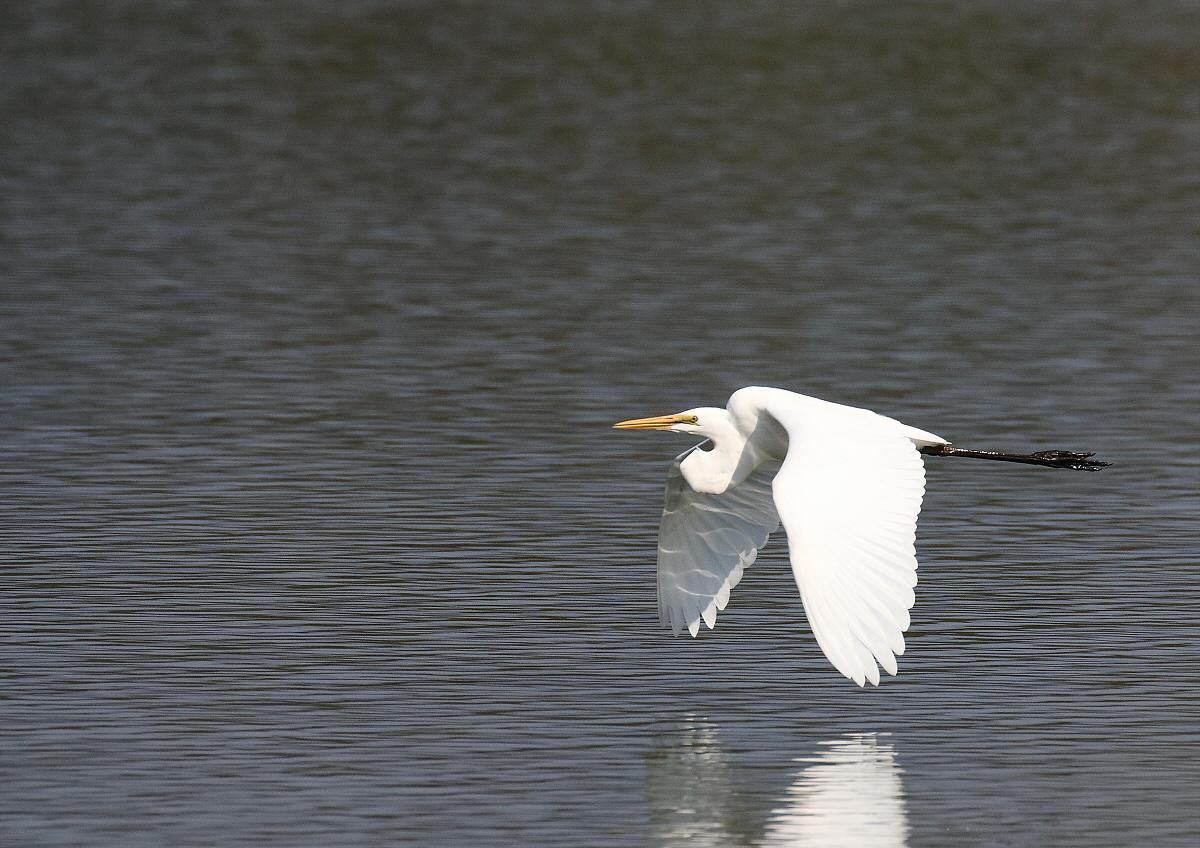 真っ白な羽で・・・_c0113597_13452273.jpg