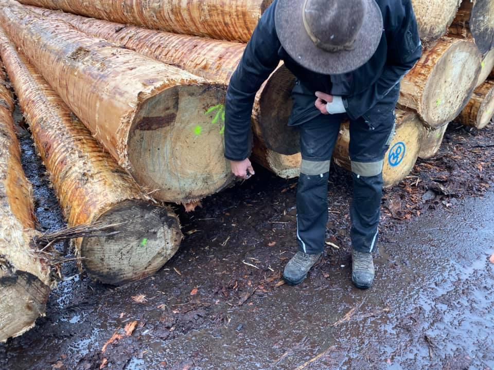 小規模製材所の木取り_e0054299_14065638.jpg