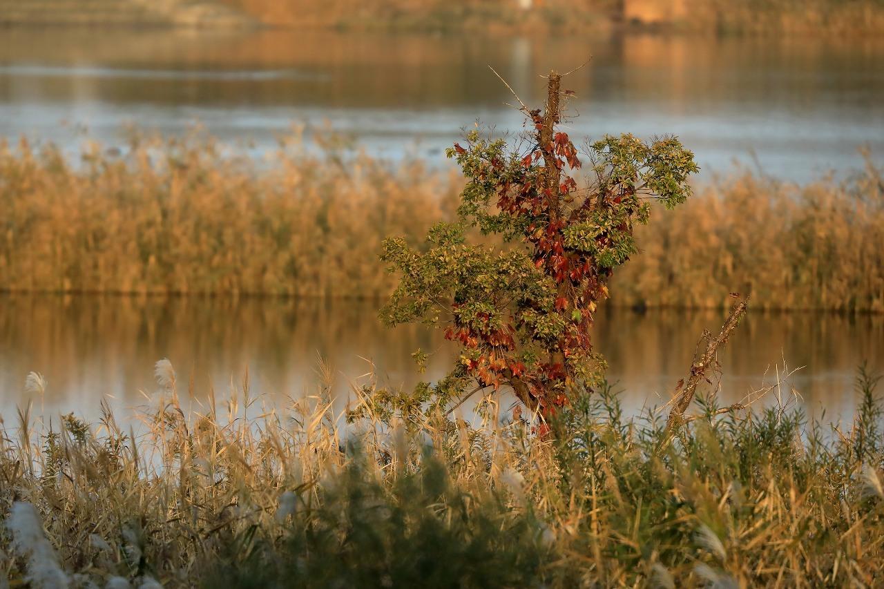 湿原にて_f0296999_14453952.jpg