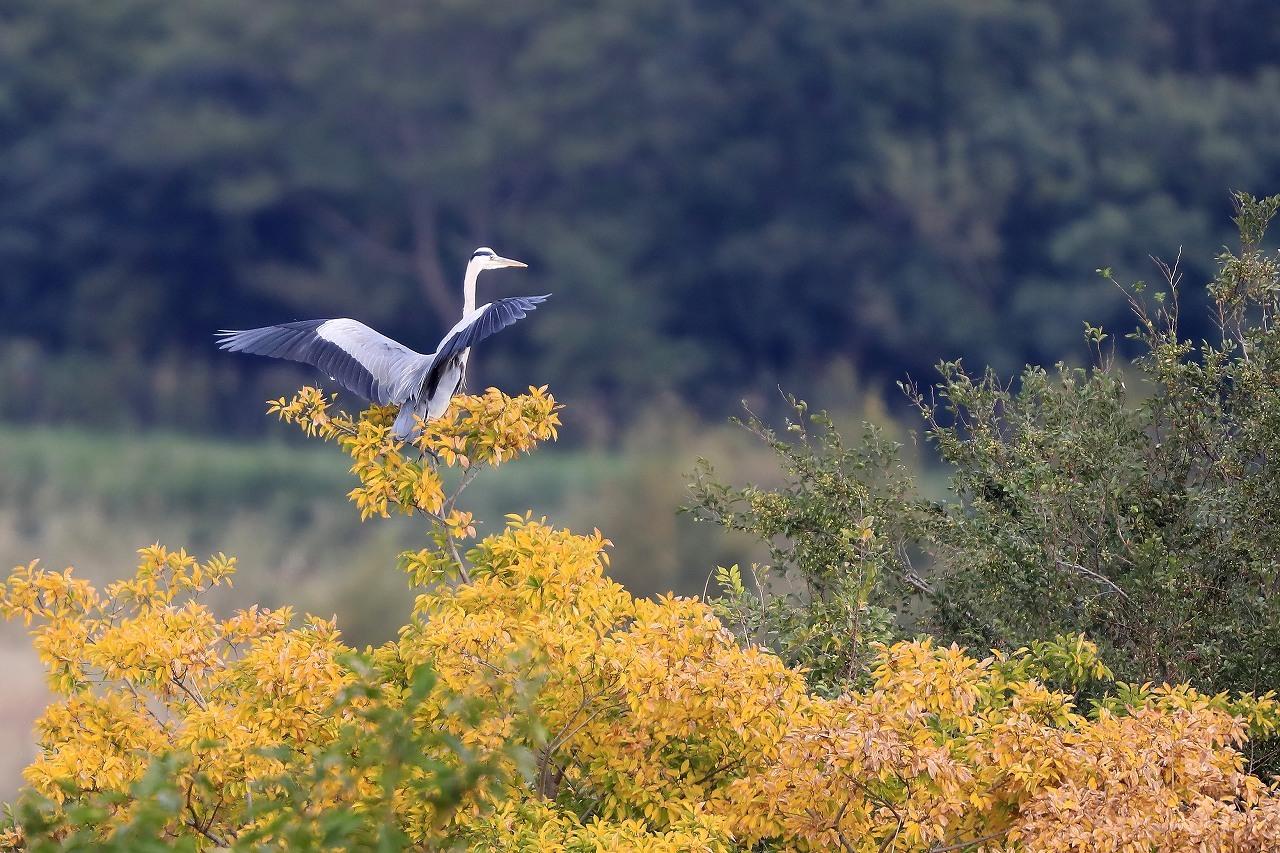 湿原にて_f0296999_14530148.jpg