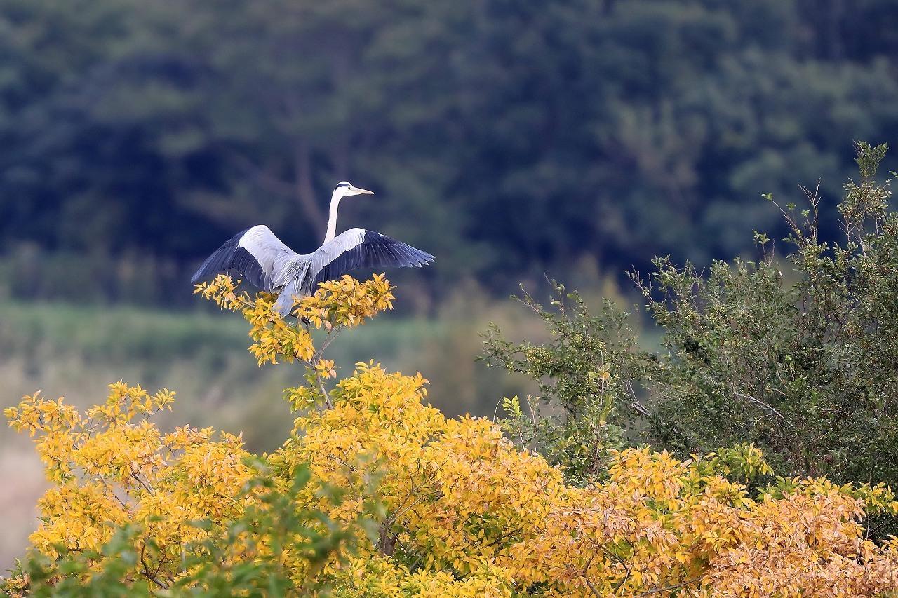 湿原にて_f0296999_14530449.jpg