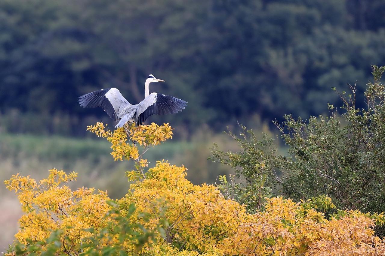 湿原にて_f0296999_14530904.jpg