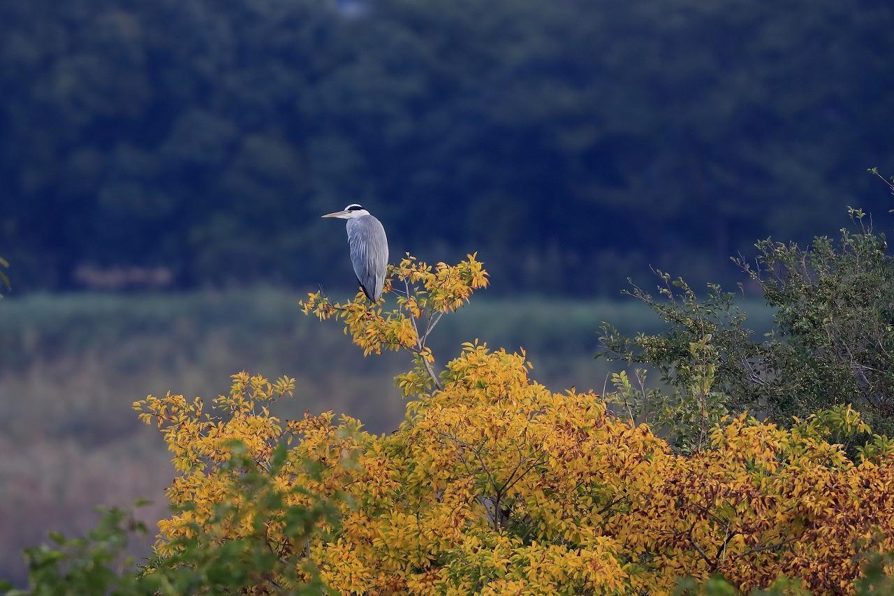 湿原にて_f0296999_14531665.jpg