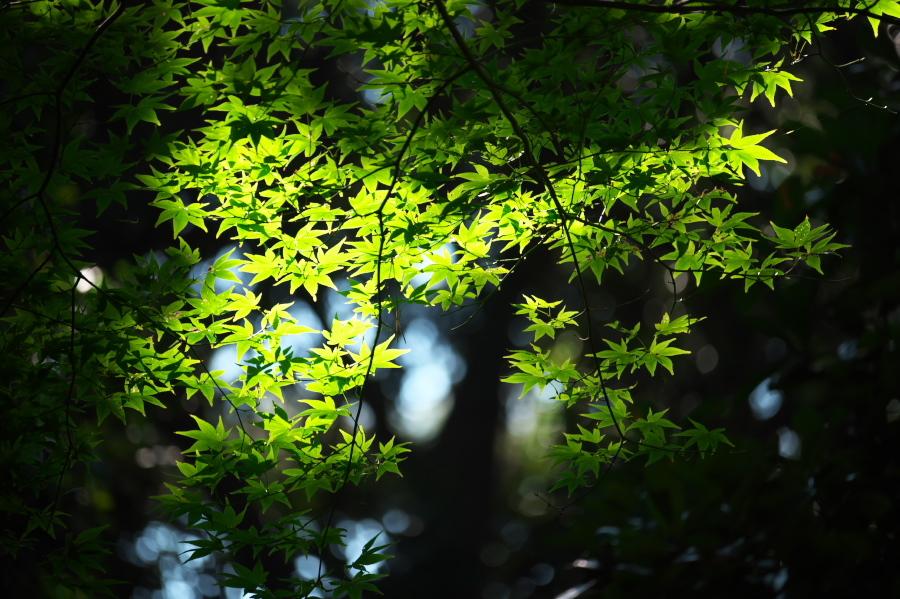 新宿御苑の秋の始まり2_a0263109_12345716.jpg