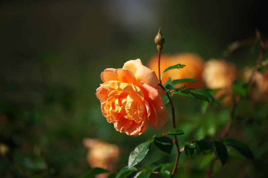 新宿御苑の秋の始まり3_a0263109_12411350.jpg