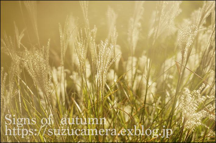 秋の気配_f0100215_23570140.jpg