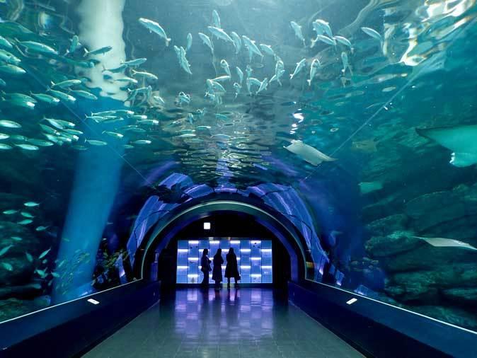 アクアパーク品川~圧巻!巨大エイたちの舞!!海中トンネル「ワンダーチューブ」_b0355317_12415903.jpg
