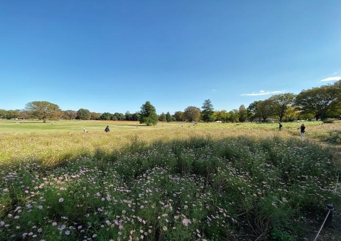 昭和記念公園ウォーキング_d0202319_14034825.jpeg