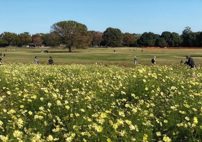 昭和記念公園ウォーキング_d0202319_14050108.jpeg