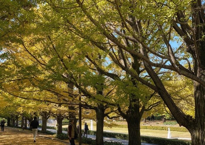 昭和記念公園ウォーキング_d0202319_14062316.jpeg