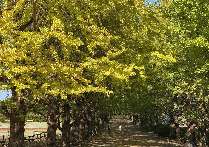 昭和記念公園ウォーキング_d0202319_14064358.jpeg