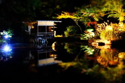 清水園 ~庭園ライトアップ最終日~_e0135219_15471071.jpg