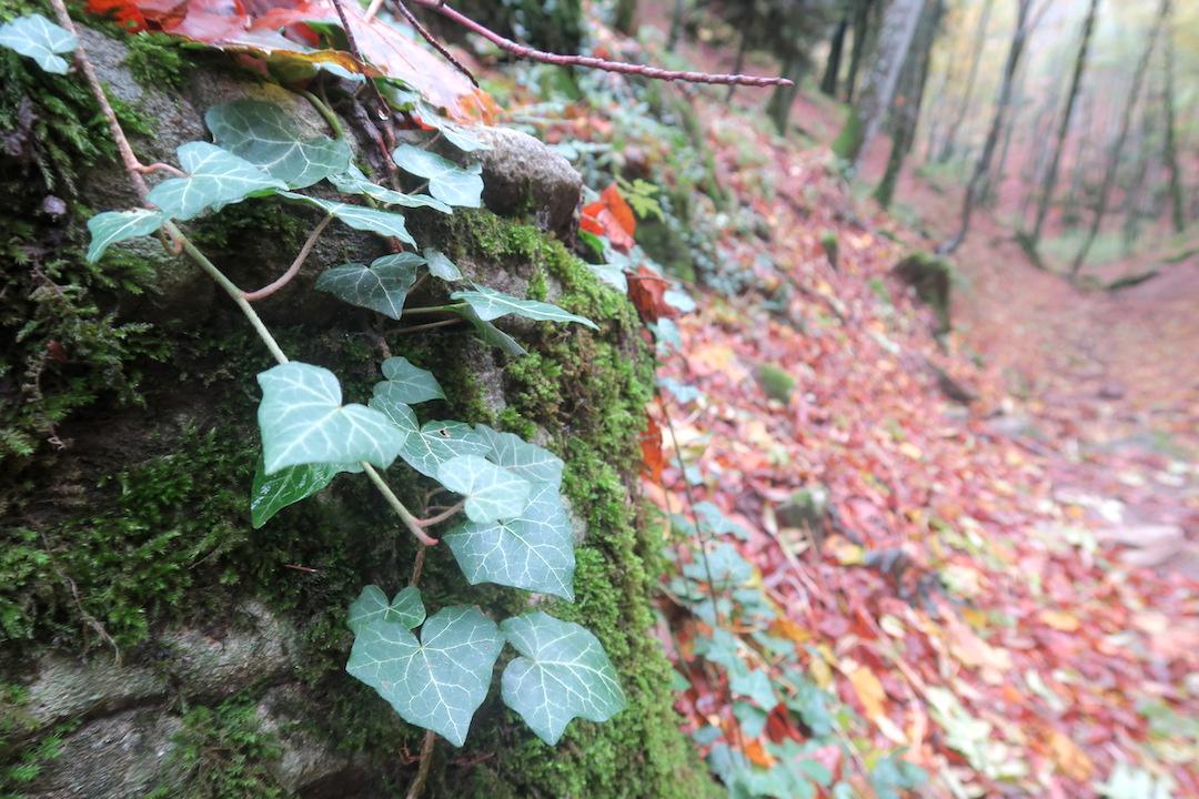 秋色の森の緑のハートと古代ギリシャ・エトルリア芸術_f0234936_8332645.jpg