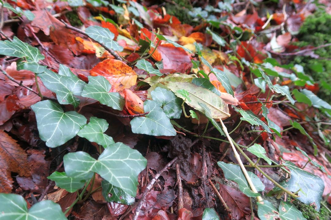 秋色の森の緑のハートと古代ギリシャ・エトルリア芸術_f0234936_8392960.jpg
