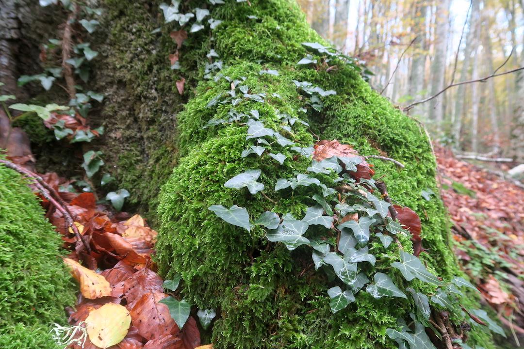 秋色の森の緑のハートと古代ギリシャ・エトルリア芸術_f0234936_9105784.jpg
