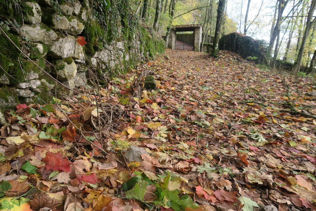 秋色の森の緑のハートと古代ギリシャ・エトルリア芸術_f0234936_96413.jpg
