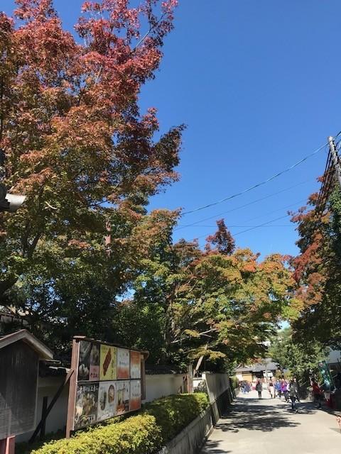 東福寺の紅葉だいぶ染まってます_d0020139_21535592.jpeg