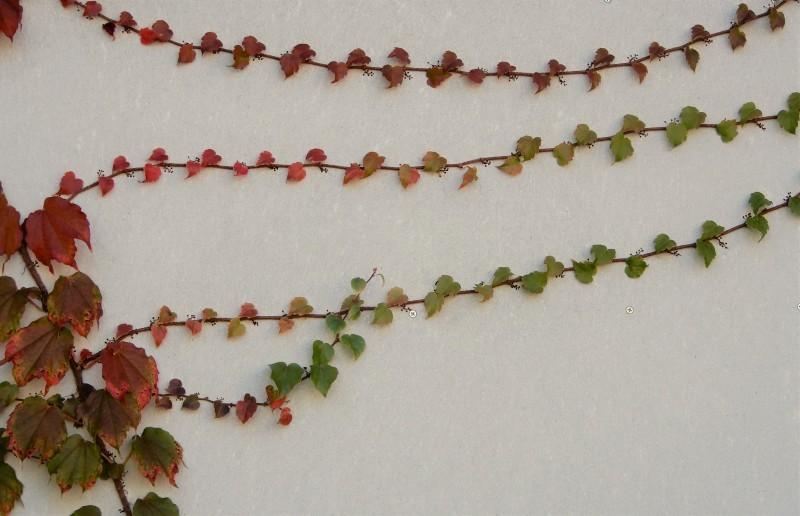 前奏曲「秋のパレット」 🎨 prelude《palette d\' automne》_f0374041_18552402.jpg