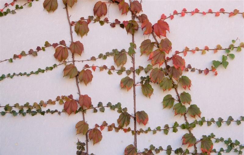 前奏曲「秋のパレット」 🎨 prelude《palette d\' automne》_f0374041_18563287.jpg