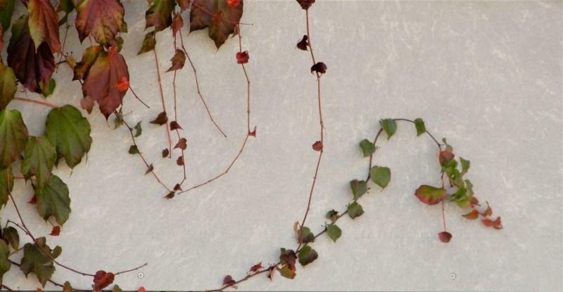 前奏曲「秋のパレット」 🎨 prelude《palette d\' automne》_f0374041_18565227.jpg