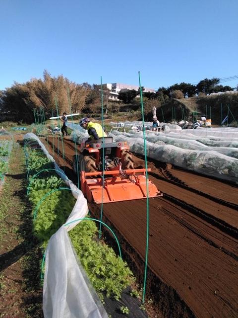 今朝は赤玉葱の定植あとネオアース玉葱2000本定植の畝作りです_c0222448_11543416.jpg