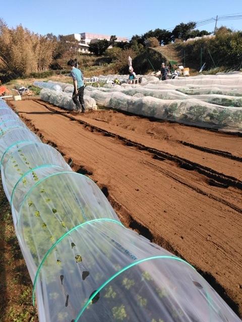 今朝は赤玉葱の定植あとネオアース玉葱2000本定植の畝作りです_c0222448_11553960.jpg