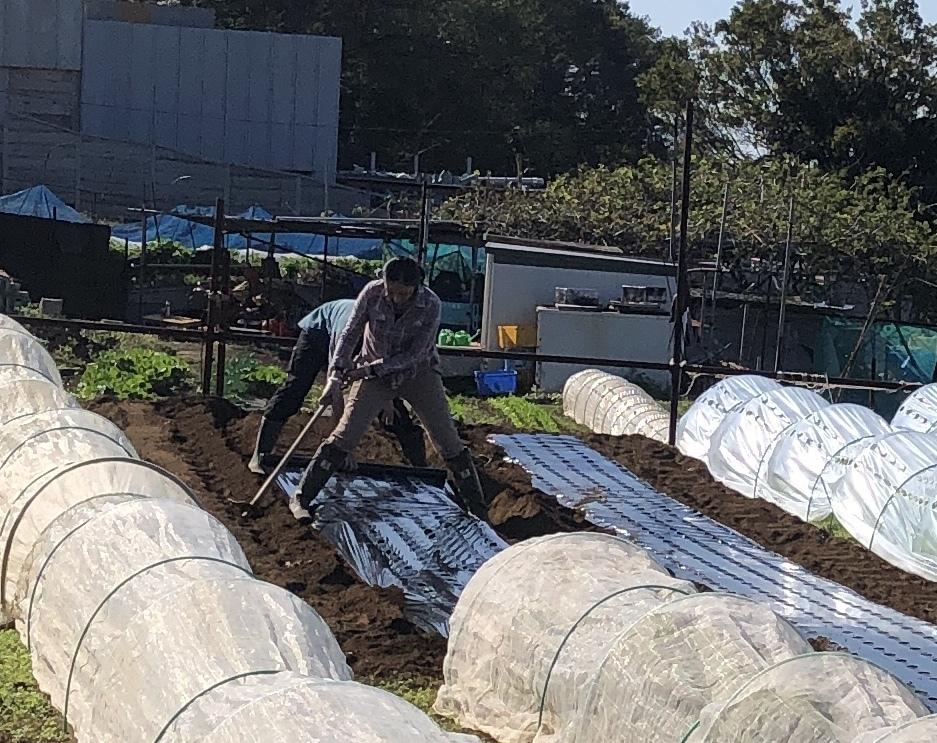今朝は赤玉葱の定植あとネオアース玉葱2000本定植の畝作りです_c0222448_11560073.jpg