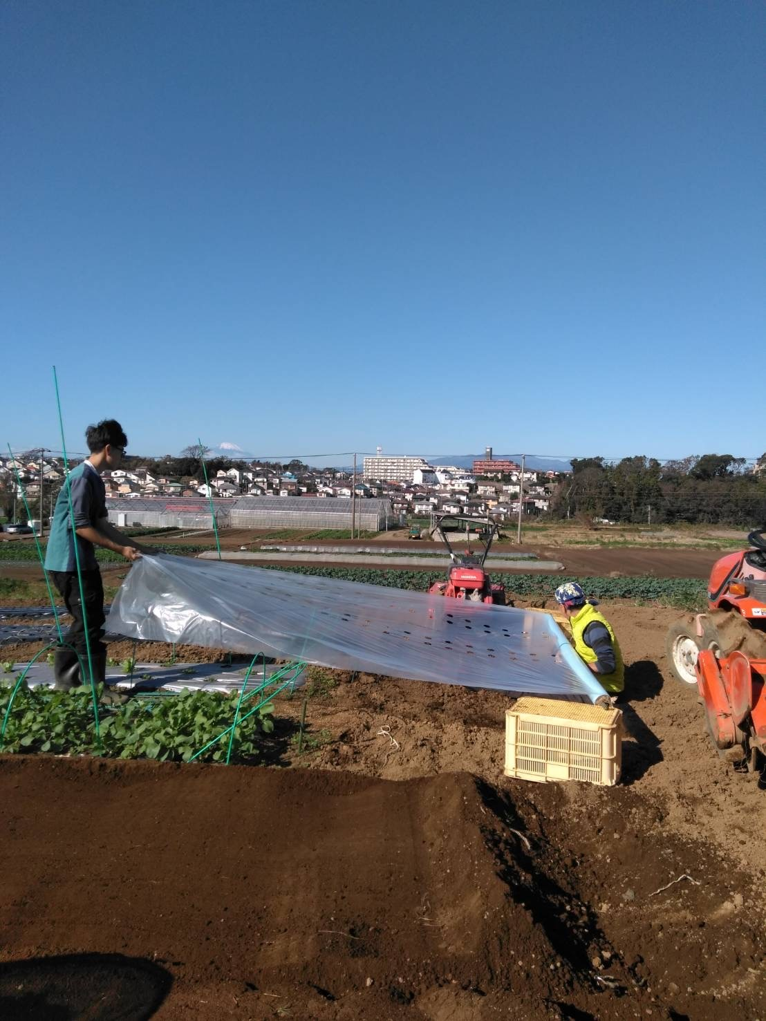 今朝は赤玉葱の定植あとネオアース玉葱2000本定植の畝作りです_c0222448_11592605.jpg