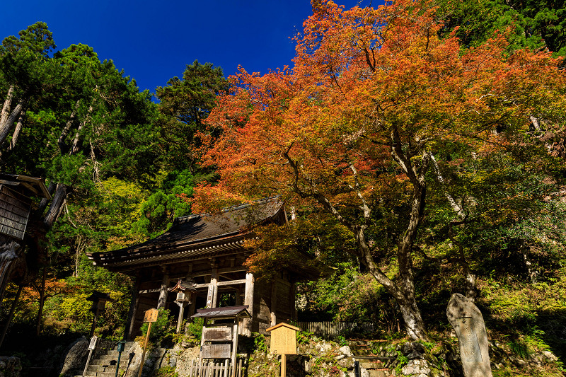 Opening!紅葉が彩る京都2019 峰定寺の彩り_f0155048_19413666.jpg