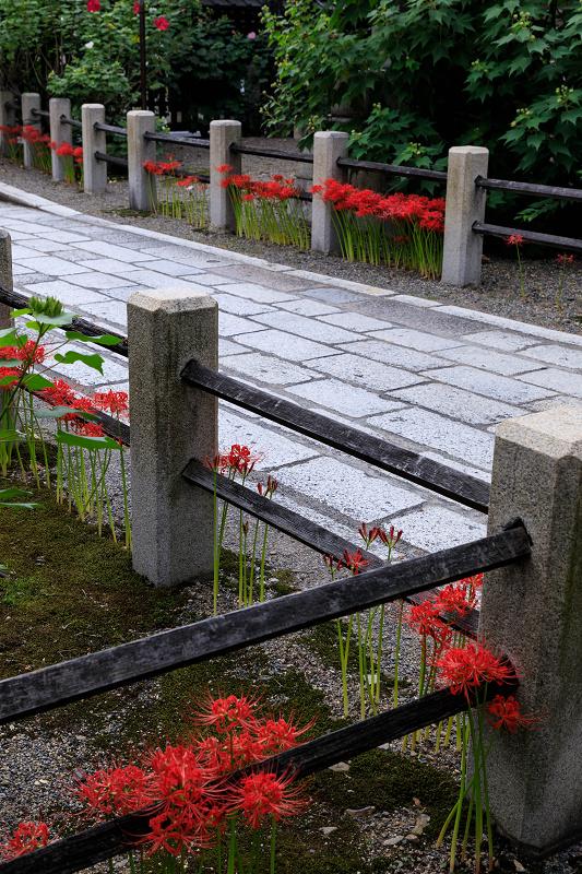 芙蓉と彼岸花咲く妙蓮寺_f0155048_23221044.jpg