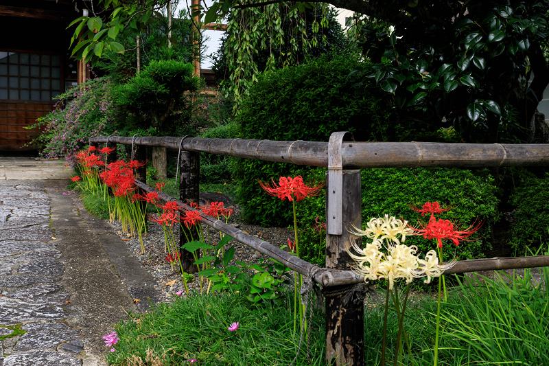 芙蓉と彼岸花咲く妙蓮寺_f0155048_23243771.jpg
