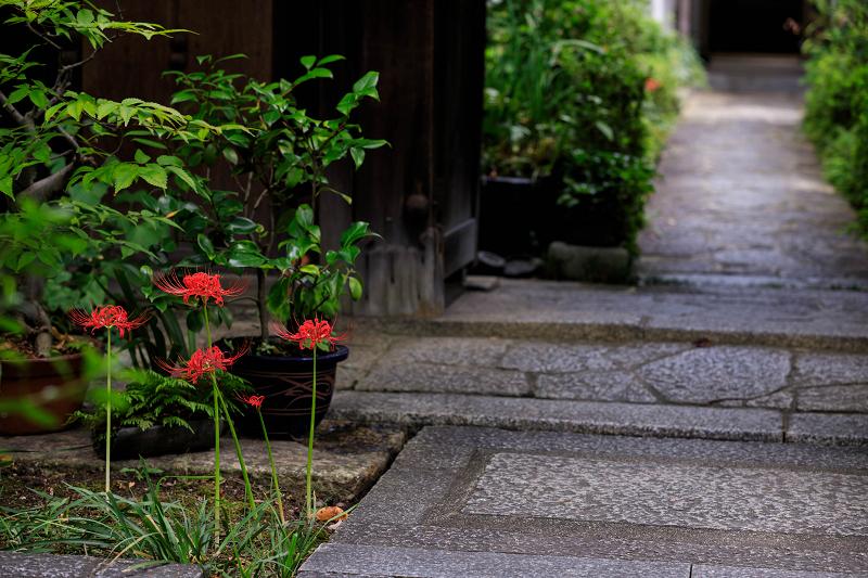 芙蓉と彼岸花咲く妙蓮寺_f0155048_2324566.jpg